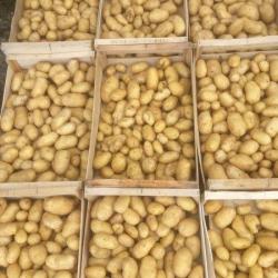 pommes de terre bio cephora
