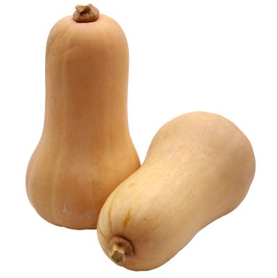 butternut-condat